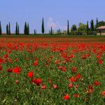 """Frühling: Italiens """"geheimnisvolle Jahreszeit"""" in fünf Luxusvillen"""