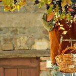 Italiens Aromen: erlesene italienische Weine für höchste Ansprüche