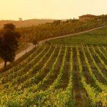 Die besten 15 italienischen Weingüter zum Besuchen