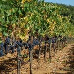 Villa Emo Capodilista – Aromen / Wein ist langsam: Ca 'Emo ist einer der besten Weine der Welt nach Robert Parker